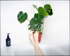 Bathing monstera (AntoineLegond) Tags: bath tub monstera plant interiordesign flash mediumformat 120 mamiya7 mamiya7ii kodak portra paris
