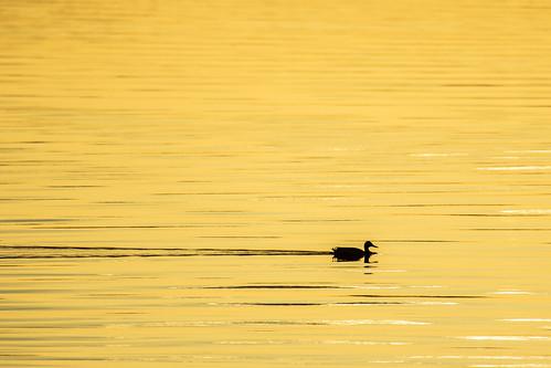 lintu ilta-auringossa 2