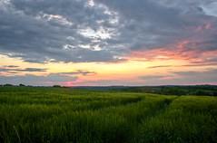 Sunset in Quercy (Denis Vandewalle) Tags: sun sunset sunlight coucherdesoleil soleil sky skyview ciel nuages clouds landscape quercy occitanie