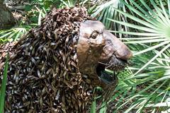 Metal Lion Sculpture (Glotzsee) Tags: florida brevardcounty melbourne brevardzoo lion sculpture metal art outdoors outside glotzsee glotzseefloridaimages zoo