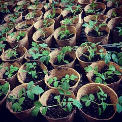 MAP's annual Seedling Sale continues this week! In honor of all this spring rain, we are excited to offer a #rainraingoaway special. Receive 20% off your purchase if it is raining!! Visit us Thursday 4-6pm or Saturday 10am-12pm to get your garden growing. (MAP Growing Green) Tags: ifttt instagram