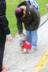 IMG_9160 (i_am_lee_sam) Tags: 2019 care strut for strays charity dog walk skokie il