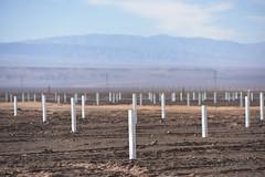 Foto5 (Intendente de Tarapacá) Tags: intendente quezada y ministra de energía participaron en la instalación los 1ros paneles fotovoltaicos granja solar 22052019