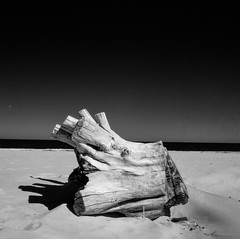 Gdansk (Joachimsen Photography) Tags: square bronicasqai nature monochrome blackwhite mediumformat bnw analog film ilfordsfx200 grayscale 6x6 filmisnotdead ilfordphoto