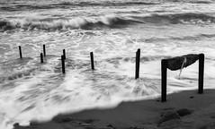 CanonEOS1n_Kodak2238_D76_13min236 (Michael Bartosek) Tags: film 35mm 35mmfilm bw blackandwhite