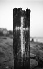 CanonEOS1n_Kodak2238_D76_13min253 (Michael Bartosek) Tags: film 35mm 35mmfilm bw blackandwhite