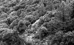 CanonEOS1n_Kodak2238_D76_13min233 (Michael Bartosek) Tags: film 35mm 35mmfilm bw blackandwhite