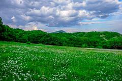 DSCF1852 (george_demetrashvili) Tags: kiketi georgia nature mountain green spring heaven trees beforerain