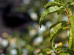P5221042 -1R (hyphy2008) Tags: pentax da 70mm f24 garden bokeh