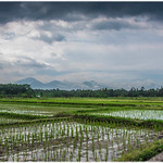2019-03-01-Ubud,Bali,Indonesia-DSC_1264-Edit_