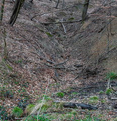 Rinne im Wald (Bernhard Schlor) Tags: niederösterreich country landscape österreich europa austria landschaft europe wald mauerbach autriche nö forest loweraustria wood forrest woods