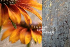 12/52. It's always summer somewhere . . . (Small and Beautiful) Tags: summer therapy colors beauty flower macro words text