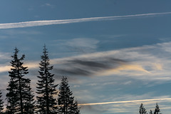 Things Behind Trees (davidseibold) Tags: america california cloud contrail jfflickr photosbydavid plant postedonflickr postedonmewe redding shastacounty sky tree unitedstates usa