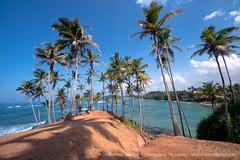 IMG_7306.jpg (Dhammika Heenpella / CWSSIP Images of Sri Lanka) Tags: dhammikaheenpella මිරිස්ස clusterofcoconuttreesbythesea ශ්රීලංකාවේචායාරූප ධම්මිකහීන්පැල්ල coconuttreehill ශ්රීලංකාවේෆොටෝ imagesofsrilanka srilanka mirissa කොකනට්ට්රීහිල් ශ්රීලංකාව traveldestination placesofinterest