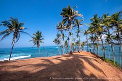 IMG_7307.jpg (Dhammika Heenpella / CWSSIP Images of Sri Lanka) Tags: dhammikaheenpella මිරිස්ස clusterofcoconuttreesbythesea ශ්රීලංකාවේචායාරූප ධම්මිකහීන්පැල්ල coconuttreehill ශ්රීලංකාවේෆොටෝ imagesofsrilanka srilanka mirissa කොකනට්ට්රීහිල් ශ්රීලංකාව traveldestination placesofinterest