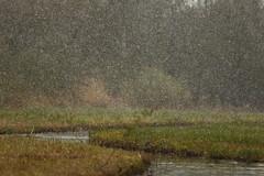 Snow in spring (NLHank) Tags: nlhank 2019 canon eos 7d mkii eos7d2 7dii holland netherlands wieden dewieden riet snow sneeuw spring lente voorjaar