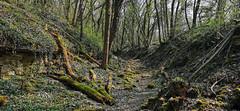 Très joli chemin dans les sous bois (Πichael C.) Tags: 140419 randonnée châtel st germain et plateau de rozérieulles rando balade promenade nature metz 57 moselle hike