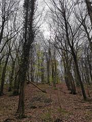 Test photo comparatif : Huawei P30 (Πichael C.) Tags: 140419 randonnée châtel st germain et plateau de rozérieulles rando balade promenade nature metz 57 moselle hike