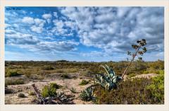 Con el desierto muy cerca (El Charco-Almería) (Jose Manuel Cano) Tags: desierto desert color colour nube cloud pita cactus azul blue nikond5100