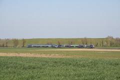Dans la plaine de la Dombes (Lyonrail) Tags: sncf ter b81500 bourgenbresse lyon villarslesdombes dombes