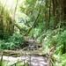 0948_Akaka_Falls_jungle_aDSC_0948