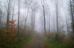 IMG_20190415_092823 (eduard43) Tags: trees bäume wald forest fog nebel 2019 rafz
