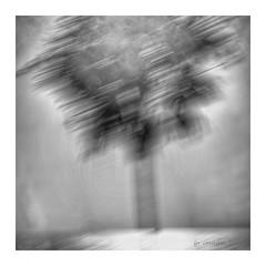 Thatch (GR167) Tags: holga squarebw blackandwhite square impressionism abstract