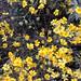 PHX Desert Botanical Garden IMG_2166