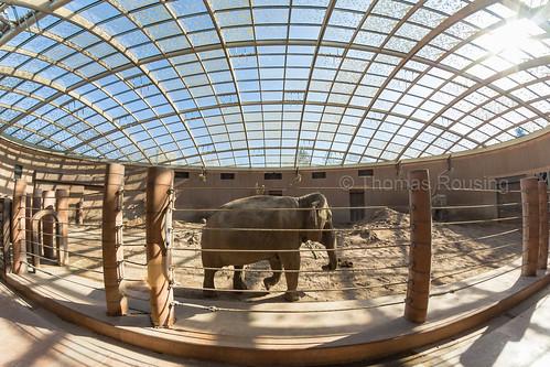 Kungrao is pure elephant love