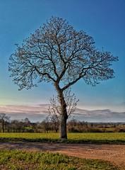Perfect (catha.li) Tags: perfect lgg4 nature tree soe