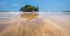 IMG_7550.jpg (Dhammika Heenpella / CWSSIP Images of Sri Lanka) Tags: dhammikaheenpella traveldestination placesofinterest ශ්රීලංකාවේචායාරූප ධම්මිකහීන්පැල්ල ශ්රීලංකාව weligamabeach මුහුදුවෙරළ imagesofsrilanka srilanka වැලිගම ශ්රීලංකාවේෆොටෝ island serendibisland landmark taprobaneisland taprobane childrunning