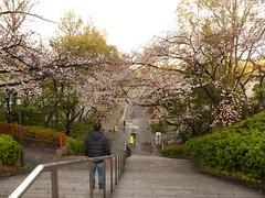 20190401_174428-P1430877 (dudegeoff) Tags: osaka japan 2019 april osakacastle 20190323b0401bkixosakacastle cherryblossoms flowers