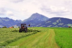 "SF_01A_00030 - Tractor and tedder on the field, Moleson's mountain on the background, Gruyère region - Switzerland (Valentin Vuichard) Tags: valentin vuichard valentinvuichard vv gruyère greyerz gruyérien gruyérienne fribourg freiburg freiburger fribourgeoises fribourgeois fri free suisse schweiz switzerland svizzera préalpes préalpe voralp voralpen prealps alps alpen mountain mountains berg bergen montagne montagnes alpage alpestre paysage country landschaft landscape landwirtschaft agriculture landwirt agri agricultural rural decay rusted old abandonned abandonnée ruine ruines ruined détruits insalubre patrimoine canon eos 300v ""canon 300v"" rebel ti"" tractor tracteur faneuse tedder moleson riaz"