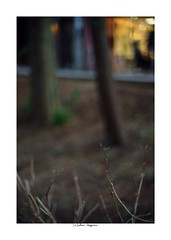 2019/3/9 - 19/21 photo by shin ikegami. - Lomography New Jupiter 3+ 1.5/50 L39/M (shin ikegami) Tags: sony ilce7m2 sonyilce7m2 a7ii 50mm lomography lomoartlens newjupiter3 tokyo sonycamera photo photographer 単焦点 iso800 ndfilter light shadow 自然 nature 玉ボケ bokeh depthoffield naturephotography art photography japan earth asia