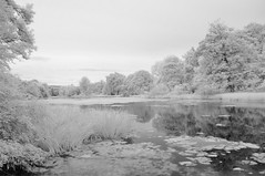 It's a new day ...... (Elisafox22) Tags: elisafox22 nikon d90 infrared infraredconvertedcamera 720nm infraredfilter monochrome htmt fyvieloch trees treemendoustuesday landscape water reflections outdoors fyvie aberdeenshire scotland elisaliddell©2019