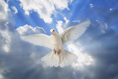 894702 (Daniel0556) Tags: horizontal ray dove sunwithclouds sunny weather perpetual white blue peace heaven everlasting eternal sunray sunlight sun sky outdoor forever day cloud bird animal air