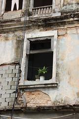 alive (Jackal1) Tags: window decay potplants cuba havana canon building portal architecture texture wall