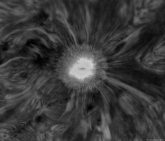 Sunspot AR2738 - Close up - Mono Inverted - 13th April 2019 (alastair.woodward) Tags: solar sun prominence active region mono colour white light false sunspot sunspots plage filament hydrogen alpha ha astronomy astrophotography stars space universe day sky skywatcher 120mm achromat refractor quark monochrome point grey blackfly cmos 2738