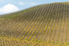 Vineyards of Oltrepo Pavese in April (clodio61) Tags: april europe italy lombardy oltrepopavese pavia agriculture color country day field green hill land landscape nature outdoor photography plant rural scenic spring springtime sunny vine vineyard