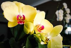 DSCF0046.jpg (DrOpMaN®) Tags: flowersplants x100t rawtherapee fujinon fujinonsuperebc23mmf2asph lightroomclassiccc fujifilm m43turkiye