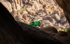 Dapper Dog in a Green Sweater (RS2Photography) Tags: 2019 spring pictureoftheday shadows outside canon80d ross stone rs2photography rs2 life yellow window light art portrait naturephotography naure natur dog cute anmial canon 80d flickr smugmug california alabamahills lonepine owensvalley easternsierra animalplanet dapper dapperdog cutedog doggo pupper pet