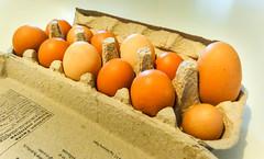 Egg variation (Canadian Dragon) Tags: 2018 bc canada dschx5c nanaimo september vancouverisland big carton dozen egg eggs fall mismatch size variety