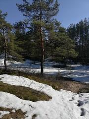 Солнечное (andreybarutkin) Tags: солнечное дюны финскийзалив природа россия nature russia санктпетербург