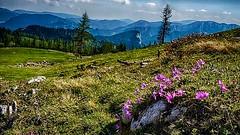 Steiermark - Graualm im Mariazeller Land (monte-leone) Tags: graualm mariazell mariazeller land landscape landschaft steiermark