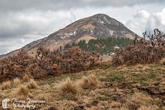Nogal Peak (Thomas Henneman) Tags: brown green lincolnnationalforest mountain nature nogalpeak peak snow spring subtlecolor whitemountainwilderness yellow carrizozo newmexico usa