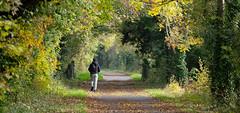 sjb-autumn (Stephen.Bingham) Tags: bristolandbathrailwaypath autumn walking path ccbysa creativecommons attributionsharealike