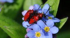 Zandberg (Omroep Zeeland) Tags: bloemen wantsen