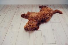 Done in (Dan Chippendale) Tags: dog doggo dogs fuji xt30 fujifilmxt30 fujixt30