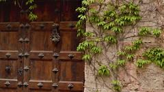 JUXTAPOSITION (Nil Inglis) Tags: art artwork nature face mother monastery photo photography portraitphotography portrait spirit composition contemporaryartist contemporary create colour vision beautiful nil nilinglis nilinglisaltés life light zest