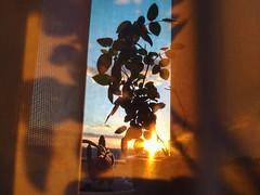 #sunset #sunrise (chrissykes4) Tags: sunrise sunset light atmosphere